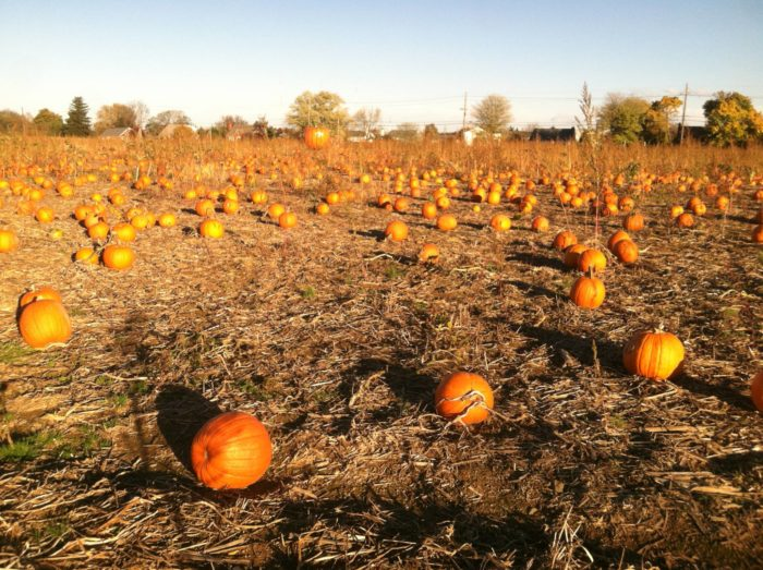 24 pumpkin patches near washington, d. C. , mapped.