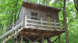 5 Treehouses Near Washington DC You Won't Believe