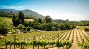 The Shortest Flight In America Will Take You Straight To Wine Country