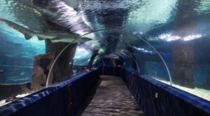 This Underwater Tunnel In Cleveland Will Enchant You In The Best Possible Way