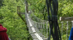 This Canopy Walk Near Chicago Will Make Your Stomach Drop
