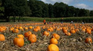 It's Not Fall Until You Visit The Largest Pumpkin Farm In Pennsylvania