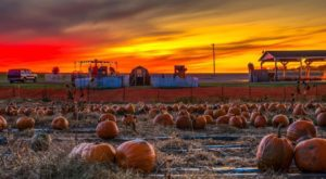 These 10 Charming Pumpkin Patches Near Columbus Are Picture Perfect For A Fall Day