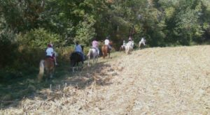 Take This Fall Foliage Trail Ride Through Delaware For A Truly Unique Experience