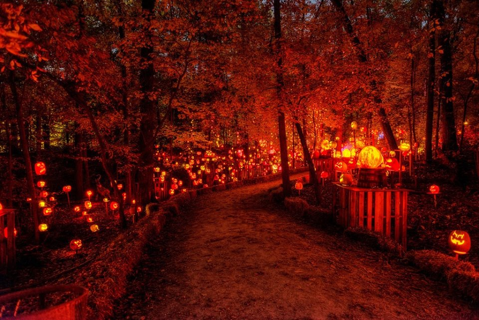 Louisville Jack O Lantern Spectacular Is The Most Magical