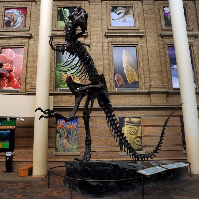 Denver Museum Of Nature Science: 9 Must Visit Museums In Denver