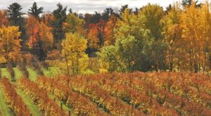 13 Beautiful Wisconsin Wineries That Are Even More Magical in the Fall