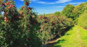 These 10 Charming Apple Orchards In Massachusetts Are Picture Perfect For A Fall Day