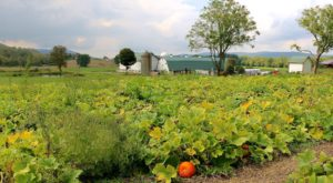 It's Not Fall Until You Visit The Largest Pumpkin Farm In New Jersey