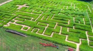 Get Lost In These 8 Awesome Corn Mazes In North Carolina This Fall