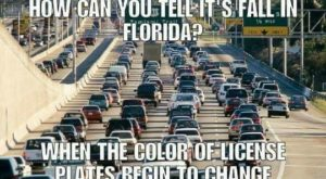 15 Downright Funny Memes You'll Only Get If You're From Florida