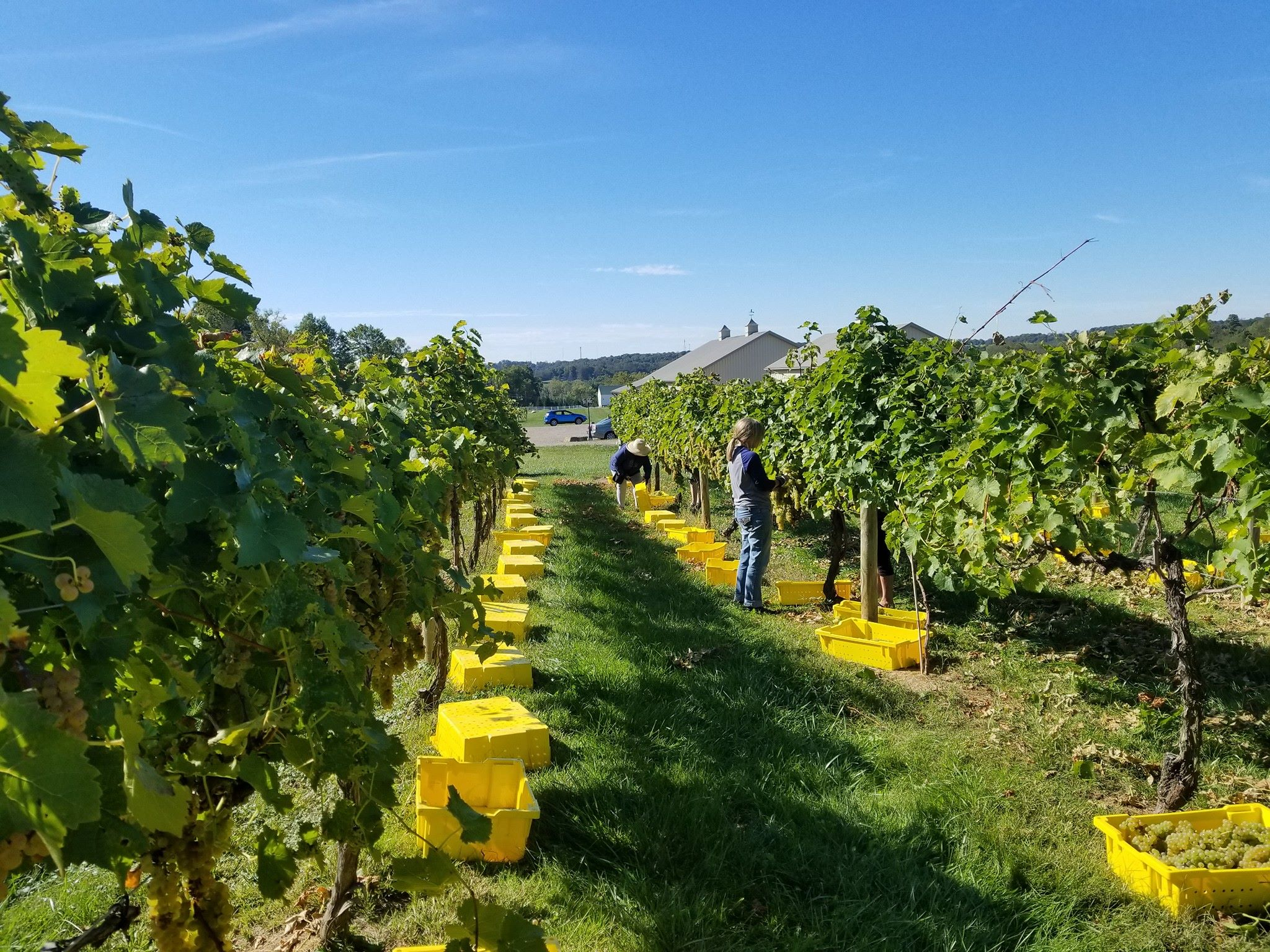 Best, Most Peaceful Winery In Ohio: Ravens Glenn Winery