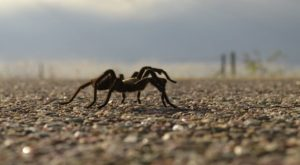 The Incredible Natural Phenomenon In Colorado That Happens Just Once A Year