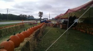 It's Not Fall Until You Visit The Largest Pumpkin Farm In South Carolina