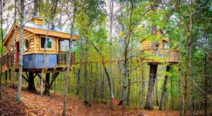 Climb Through The Trees And Then Spend The Night In Them At This Epic Treetop Destination In Kentucky