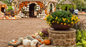 The Pumpkin Wonderland In Texas That Will Make All Your Fall Dreams Come True
