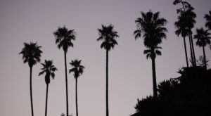 Why Palm Trees In LA Might Soon Disappear For Good