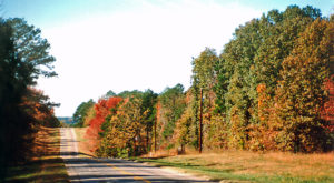 This Dreamy Road Trip Will Take You To The Best Fall Foliage In All Of Dallas – Fort Worth