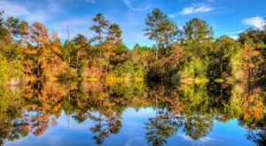 Here Are The Best Times And Places To View Fall Foliage In Florida