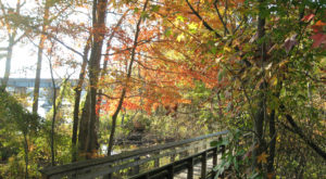 This Breathtaking Hike In Virginia Leads You Through A Tunnel Of Fall Leaves