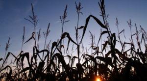 A Walk Through These Haunted Corn Mazes In Arizona Will Give You The Heebie-Jeebies