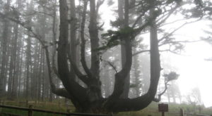 Most People Don't Know The Story Behind This Sinister Oregon Tree