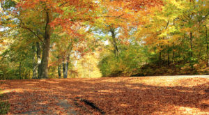 This Dreamy Road Trip Will Take You To The Best Fall Foliage In All Of Louisville