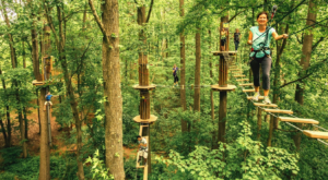 This Canopy Walk Near Kansas City Will Make Your Stomach Drop