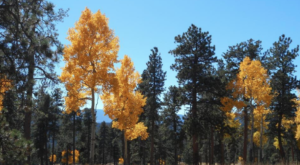 The Breathtaking Colorado Hike That Glows Gold Once A Year