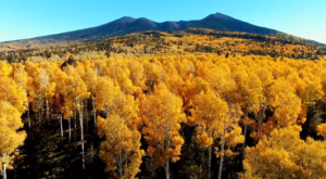 This Incredible Drone Footage Will Show You Just How Amazing Fall Looks In Arizona