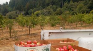 These 6 Charming Apple Orchards Around San Francisco Are Picture Perfect For A Fall Day