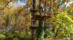 This Canopy Tour In Maryland Is The Perfect Way To See The Fall Colors Like Never Before