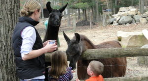 You'll Love A Visit To This Rhode Island Farm And Petting Zoo
