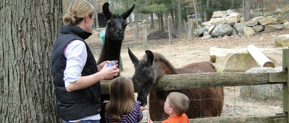 Chepachet Farms Has The Perfect Petting Zoo In Rhode Island