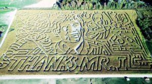 Get Lost In These 8 Awesome Corn Mazes Near Detroit This Fall
