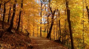 6 Short And Sweet Fall Hikes In Pittsburgh With A Spectacular End View