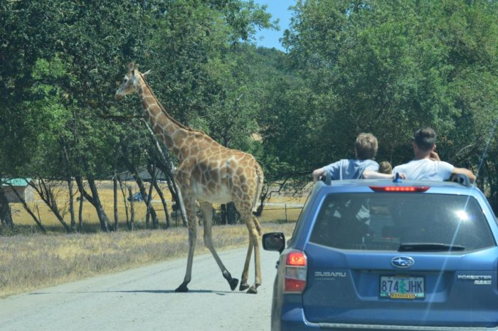 The Thrilling Wildlife Safari In Oregon Where You Can See ...