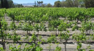 Take This Picture Perfect Winery Road Trip To Sample Nevada's Best Wines