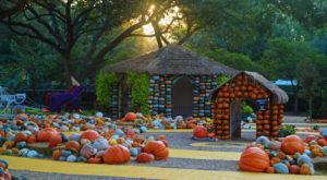 15 Harvest Festivals Around Dallas – Fort Worth That Will Make Your Autumn Awesome