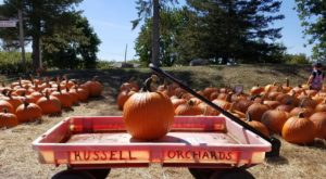 These 7 Charming Pumpkin Patches In Boston Are Picture Perfect For A Fall Day