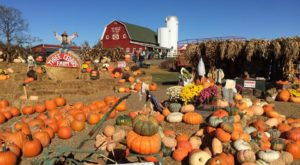 These 7 Charming Pumpkin Patches Near Detroit Are Picture Perfect For A Fall Day