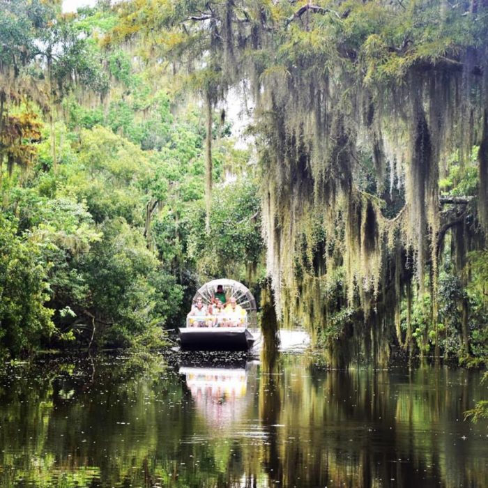 5 Amazing Swamp Tours Near New Orleans That Ll Lead You To
