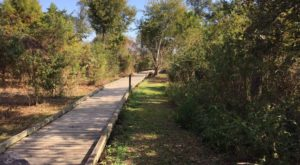 5 Hidden Trails Near New Orleans Only Locals Know About