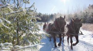 This Christmas Farm In Colorado Will Positively Enchant You This Season