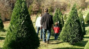 13 Magical Christmas Tree Farms To Visit In South Carolina This Season