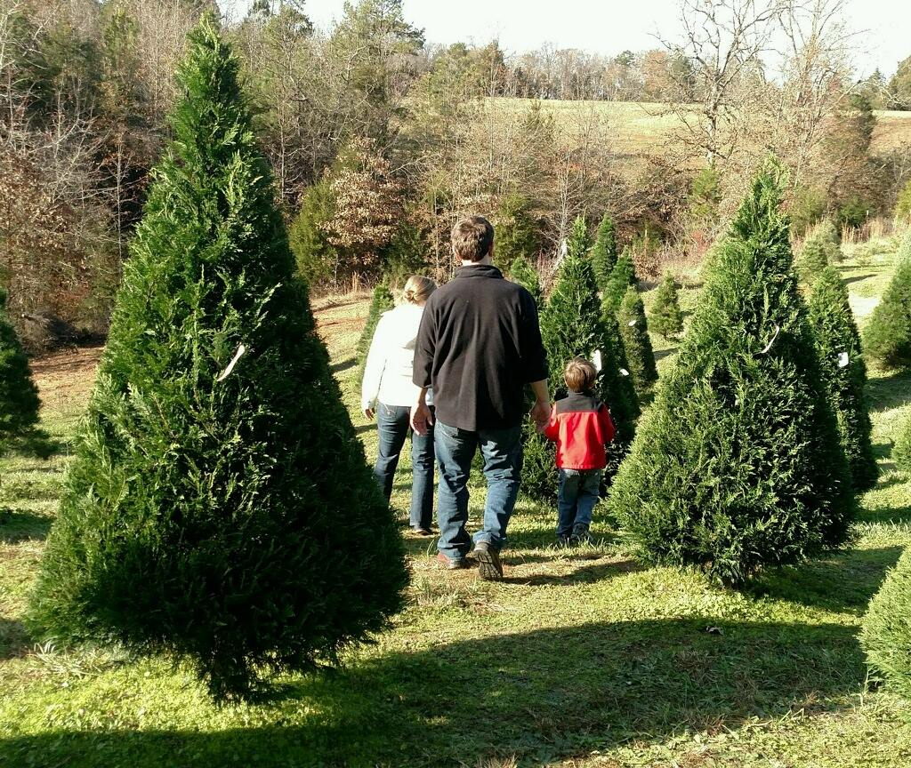 13 Magical Christmas Tree Farms In South Carolina