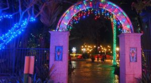 The Winter Walk In Florida That Will Positively Enchant You