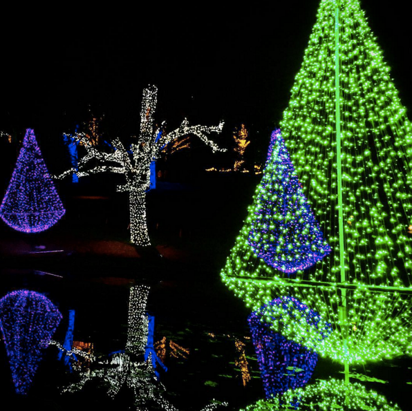 Key Arena Christmas Lights: Cheekwood Botanical Gardens Has The Best Holiday Light