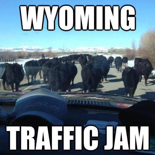 See The Best Wyoming Meme's As Of 2018