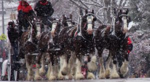 Experience The Magic Of The Holidays At This Festive Horse Drawn Carriage Parade Near Cincinnati